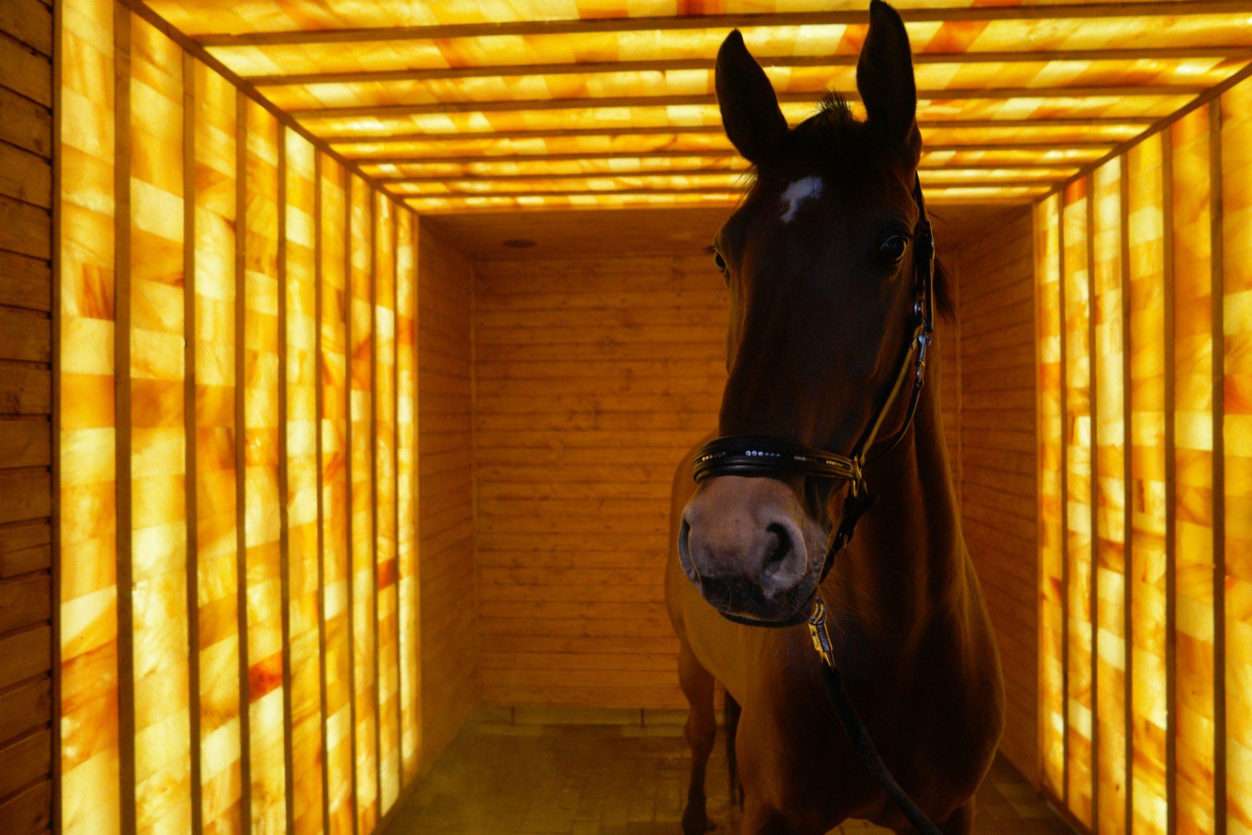 SG Foto mit Pferd